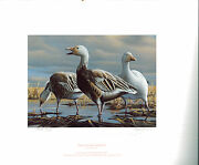 Minnesota 7 1983 State Duck Stamp Print Blue/snow Geese By Gary Moss