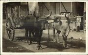Ponce Puerto Porto Rico Oxen Wagon C1915 Used Real Photo Postcard Jrf