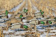Greenhead Gear Over-size Mallard Shell Harvester Pack Duck Decoys Avery W Stakes