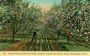 Wenatchee, Wa Where Climate, Soil And Water Combine To Grow The Perfect Apple