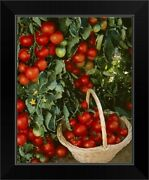 Fresh Market Tomatoes On The Vines And Black Framed Wall Art Print, Vegetables
