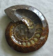 3602g Natural Poilished Jade Pattern Ammonite Fossil Ashtray Container 1