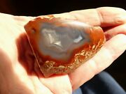Yellow Cat Petrified Wood - Polished - Bright Red 2 Inch 2.8 Oz.
