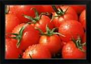Close-up Of Tomatoes, England, United Black Framed Wall Art Print, Vegetables
