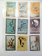 18 Vintage Birds Flying Lot Single Swap Playing Trading Cards 1940's 1950's