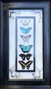 Real Butterfly Framed Collection