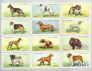 Cigarette Cards. Wills Tobacco. Dogs. 1937. Complete Set Of 50.