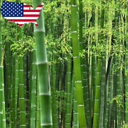 50 Rare Moso Bamboo Seeds - Exotic Garden Shade Plants, Fast Growing