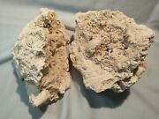 Large Pair, Matching Halves,tampa Bay Calcified Fossil Coral Geode