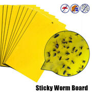 Strong Flies Traps Bugs Sticky Board Catching Aphid Insects Pest Killer Fly Caga