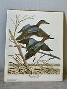 """John A Ruthven, Limited Edition Signed Print """"""""cinnamon Teal"""" Georgetown Series"""