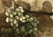 G H Rothe Green Field Grapes Art Hand Signed Limited Edition Paper Fruits L@@k