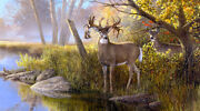Reindeer Oil Painting Picture Home Decor Giclee Art Printed On Canvas L2373