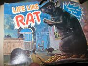 Rubber Black Rat Life Like Vintage Squeaker Long Tail Box And 2 Rats Nos