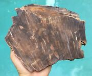 """Petrified Wood Beautiful Brown 1/2"""" Thick Slab Tree Fossil Slice With Bark"""