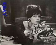 Claudia Cardinale Lays On A Tiger Skin Rug Vintage Photo