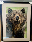 Thomas Mangelsen Limited Edition Print - Eyes Of The Grizzly