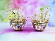 Yaraphan Mini Rice Bowls Bone China Pair Wrapped As Ornaments 2 Inches Across