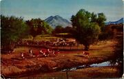 Cattle Ranch Farm Animals Cows Postcard Used 33784