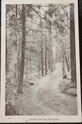 C.1940s B/w Rppc Boulder Junction Wisconsin, Forest Trail