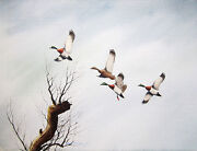 David Hagerbaumer Signed 1956 Watercolor Painting - Top Of The Rise Mallards