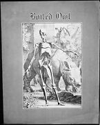 Boiled Owl - 5.5 Wp - Tabloid - Comix - 1st Printing - S Clay Wilson