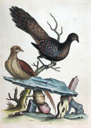 1744,edwards George Handpainted Copper The Hen Peacock Peasant From China Un8