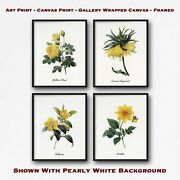Yellow Flower Print Set Of 4 - Group Of 4 Botanical Prints - Floral Wall Art