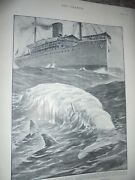 Rms Port Royal Encounters Dead Whale On Way Jamaica 1901 W T Maud Print Ref Am