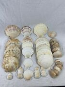 18 Scallop And 24 Clam Baking Shells. Multiple Sizes. All Clean Ready To Use.
