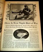 Carrier Pigeon 1930 Army Weapon Pictorial Fort Monmouth Trained For Night