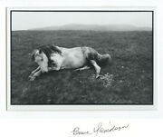 Wales White Horse On Field Vintage Hand Signed Art Photo By Bruce Davidson