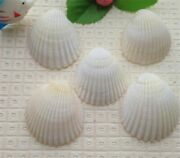 Organic White Sea Shell Wall Ornaments For Home And Wedding Decoration Accessories