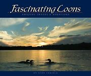 Fascinating Loons Amazing Images And Behaviors Wildlife Ap... By Tekiela Stan