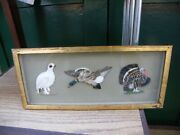Frame Birds Feathers Real Work End Xix ° Th Century