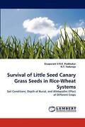 Survival Of Little Seed Canary Grass Seeds In Rice-wheat Systems Soil Condition