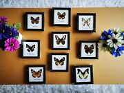 Mix 9 New Real Butterfly Insect Taxidermy Display Framed Wall Mount Home Decor