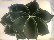 Carole Shiber Hand Painted Green Placemats 4 Leaf Charger New Old Stock Rare