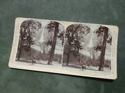 Antique Old 1894 Real Photo Stereoview Card Yosemite Falls Donkey California
