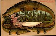 Alligator Border Postcard Tobacco Seed Bad Greetings From The Sunny South-bk32
