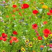 Midwest Wildflower Seed Mix - 1 Pound To 50 Pounds Free Shipping