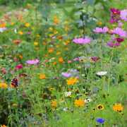 Northeast Wildflower Seed Mix - 1 Pound To 50 Pounds Free Shipping