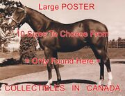 Northern Dancer 1963 Race Horse Born In Oshawa = Poster 10 Sizes 14 - 4.5 Ft
