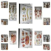 Lot 14 Vintage Anatomical Chart Co. Thick Plastic Signs Charts By Peter Bachin