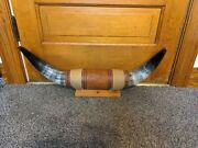 Mounted Steer Horns Pretty 23 8 Diameter Polished Mount Bull Cow Decorative