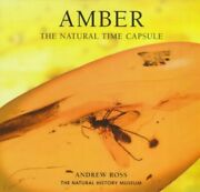 Amber The Natural Time Capsule Earth By Ross Andrew Paperback Book The Fast