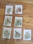 Victorian Sewing Trade Cards Singer Song Birds Collection Lot 14