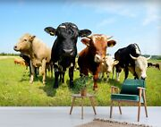 3d Pasture Angus Cattle C04 Animal Wallpaper Mural Self-adhesive Removable Zoe
