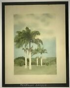 1920and039s Hand Colored Photo Of Palms In Moanalua Garden Honolulu Hawaii