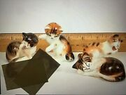 1-2-3-4 Royal Doulton Kittens Figurines Ex Cond Vintage Bin Cats 39 Each